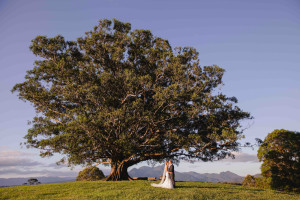 figtree wedding